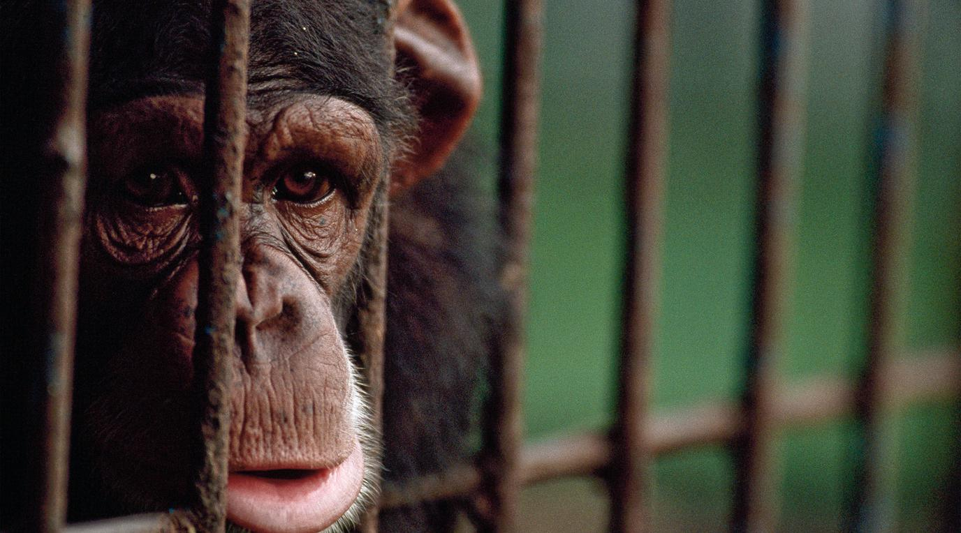 should zoos be banned pros and cons